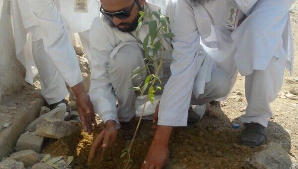 Plantation pic 2